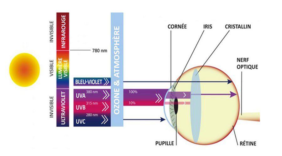 Lumiere-guide-de-la-vue-WEB.jpg