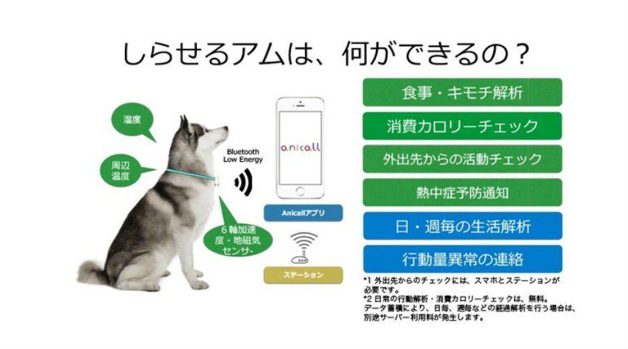 Anicall-Shiraseru-Am.jpg