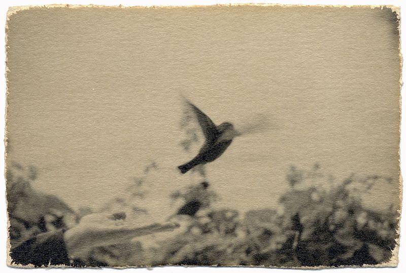 """Résultat de recherche d'images pour """"masao yamamoto main oiseau"""""""