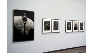 Michel Vanden Eeckhoudt : vision animale