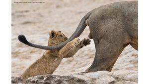 Le Comedy Wildlife 2019 révèle avec humour les animaux finalistes
