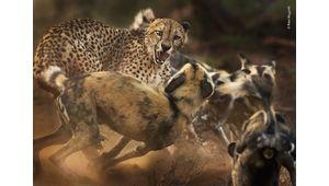 La vie sauvage dans toute sa splendeur et sa férocité avec le Natural History Museum