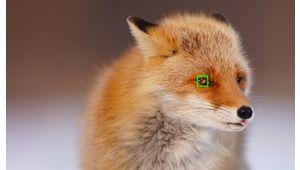 Sony Alpha 9 (A9) : l'hybride est mis à jour et gagne la détection des animaux
