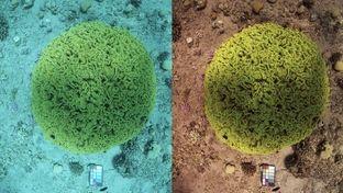 """Une nouvelle méthode pour """"retirer"""" l'eau des photos sous-marines"""
