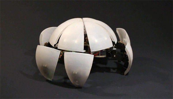 Crabe robot