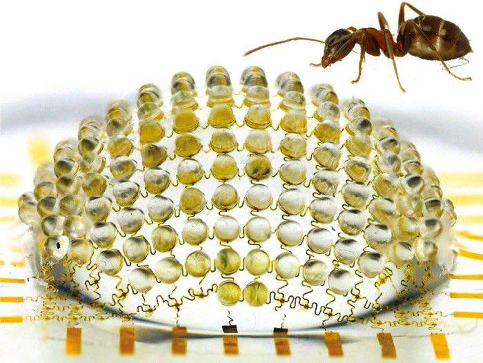Insecte lentille photo