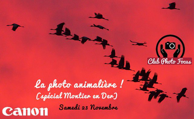 club photo focus : la photo animalière