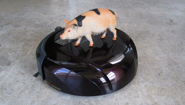 Aspi cochon