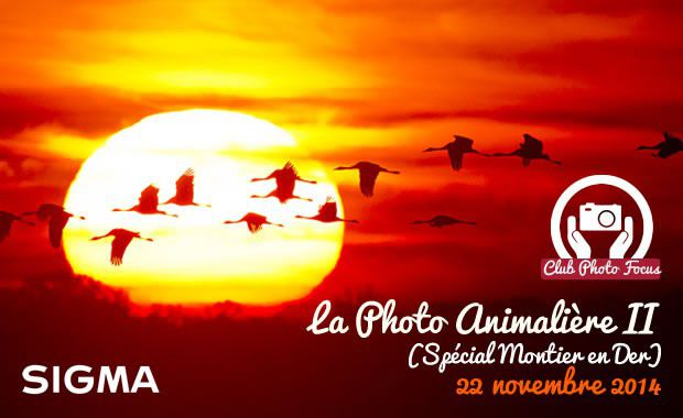 club photo focus spécial Photo animalière