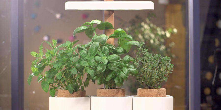 Lilo Smart De Pret A Pousser Des Herbes Aromatiques Connectees