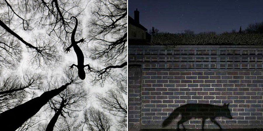 Inspiration photo animali%C3%A8re(1)