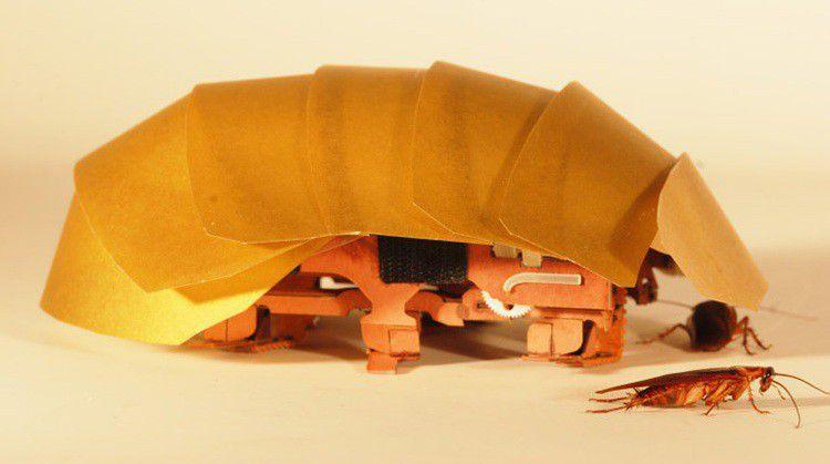 Cramroach750