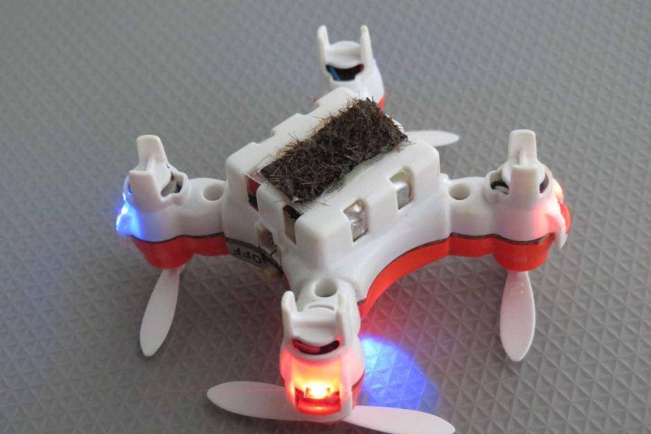 Drone abeille