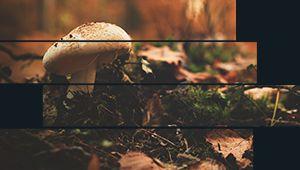 Concours Vu[e] – Novembre: l'automne