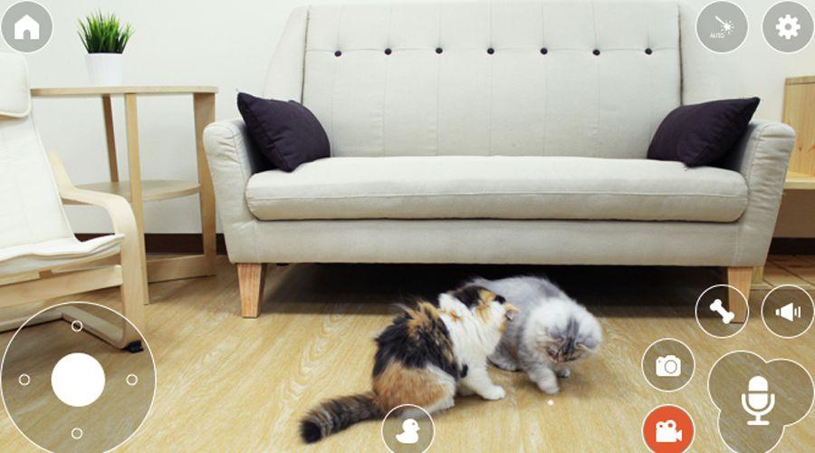 Pawbo+ app avec 2 chats.jpg
