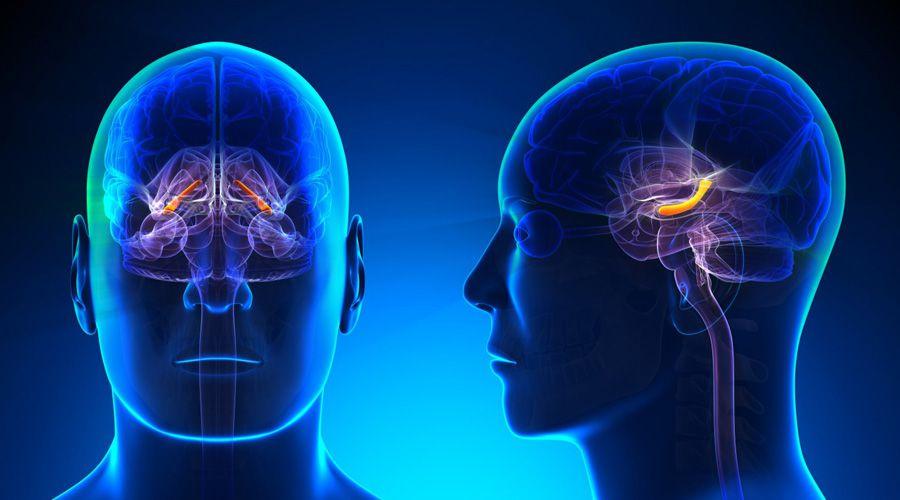 Améliorer la mémoire via un implant cérébral, c'est possible