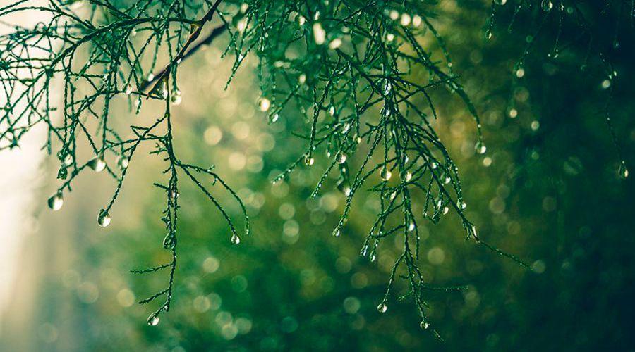 photographier-sous-la-pluie-57655b01__w910.jpg