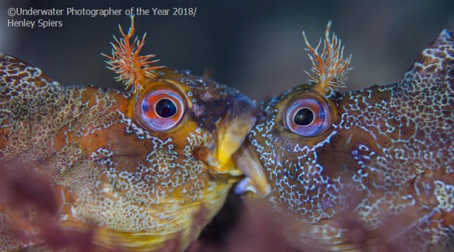 underwater-photo-on-the-year-2018-les-resultats-aacb3497__w910.jpg