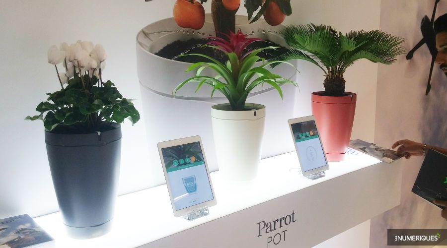 1_parrot-pot-news-2 2.jpg
