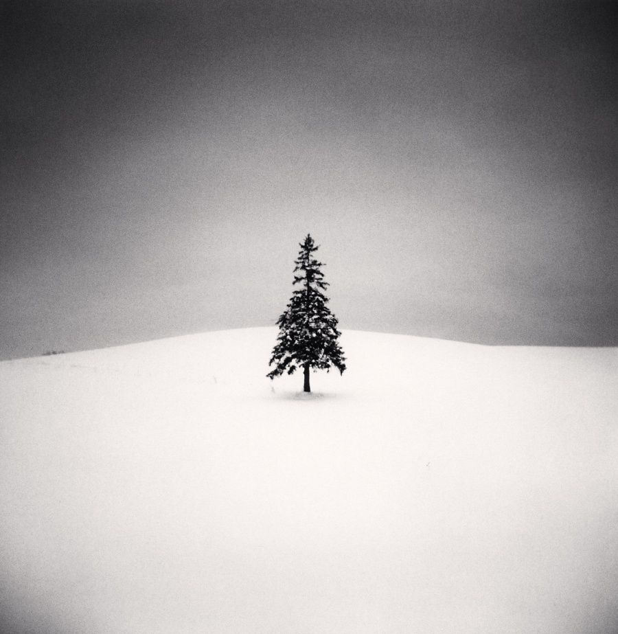 Lone Tree, Study 2, Bibaushi, Hokkaido, Japan. 2004.jpg
