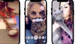 Snapchat fait des filtres pour… chats