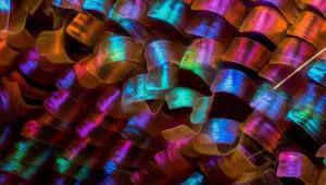 Les gagnants du Small World Photomicrography Competition sont révélés