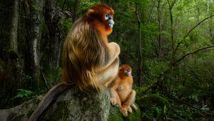Les lauréats du concours Wildlife Photographer sont annoncés