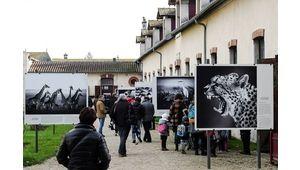 Festival de la photo animalière et de nature de Montier-en-Der