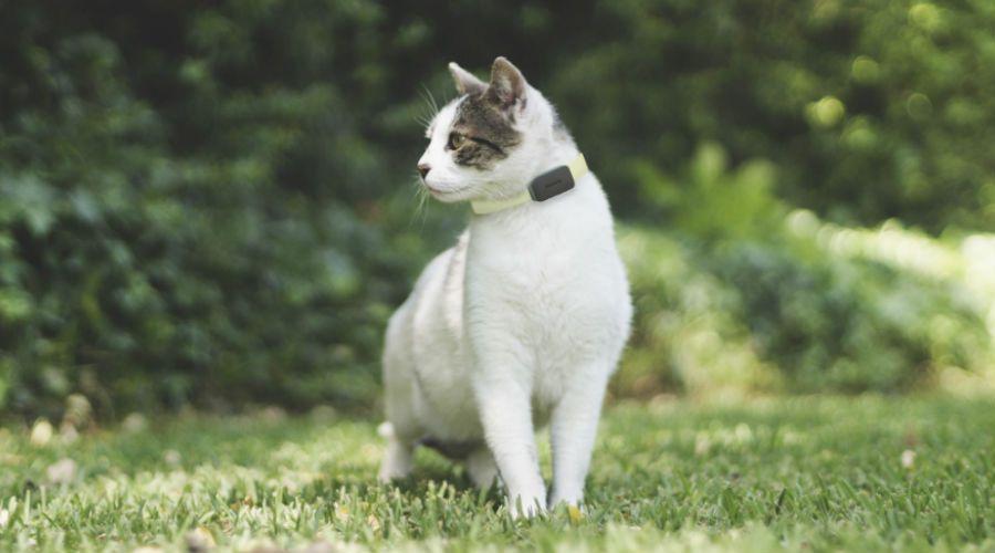 Test invoxia gps pet tracker b