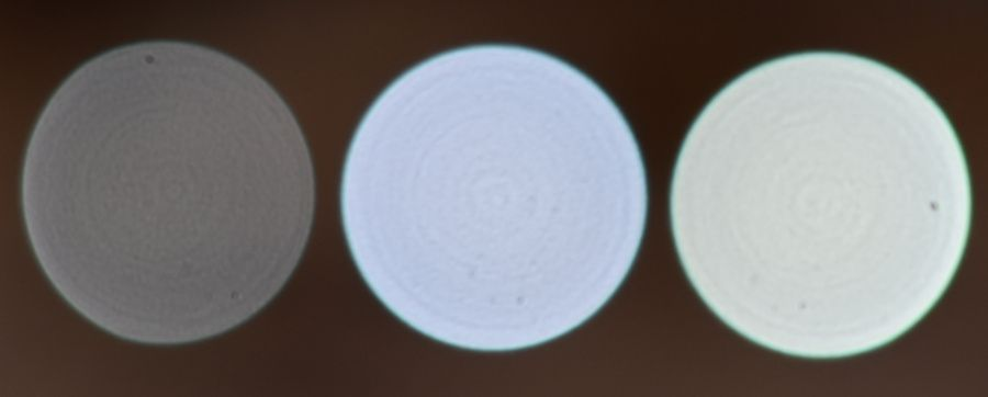 DSC_0576 crop 2.JPG