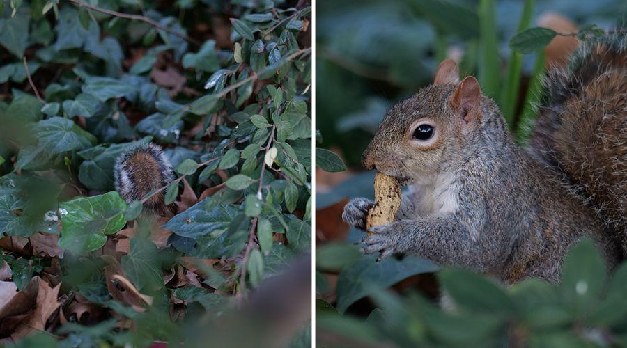1_Comparaison – 2 images ecureuils.jpg