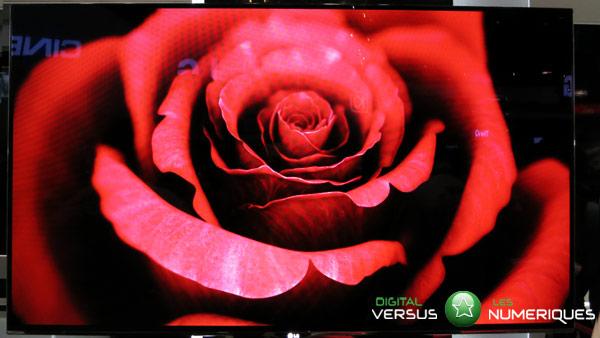 Rose oled lg